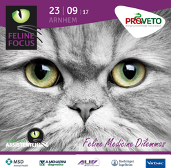 Veterinary HPM op Feline Focus 2017