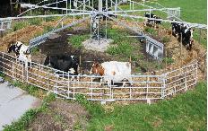 Koeien stapmolen
