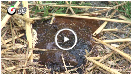 100 sec dierenarts kalverdiarree