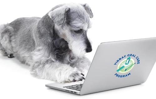 electronic Veterinary Dental Scoring